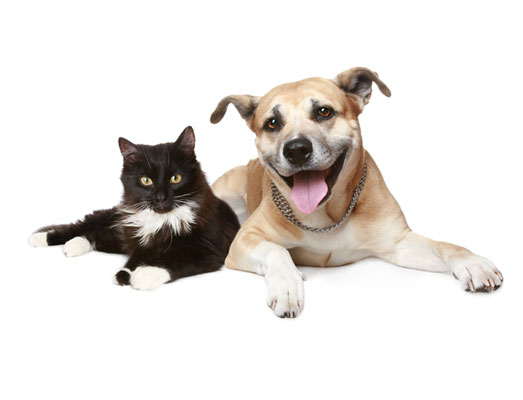 General Health Examination – including titre testing, nutritional advice specific for your pet and overall health examination checking teeth, heart, lungs etc